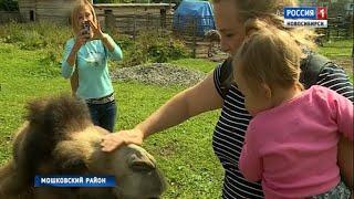 В Мошковском районе на ферме с редкими для Сибири животными осваивают агротуризм