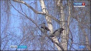 """""""Зеленый щит"""" Петрозаводска"""