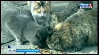 """В Астраханском музее культуры открылась выставка """"Букет котов"""""""