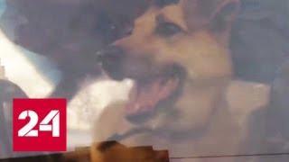 В Москве прохожие не дали эвакуировать машину с собакой внутри - Россия 24
