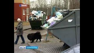 С 1 января вывозом мусора займётся единый региональный оператор