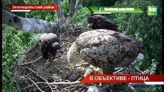 Орланы-белохвосты разлетелись на зимовку: кто в Харьков, кто в Тольятти, кто в Пензу | ТНВ