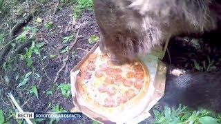 Вологодская пицца побывала в стратосфере, а затем была съедена медведем
