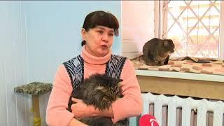 01 03 2018 Концерт «Поможем бездомным животным» пройдёт в Ижевске