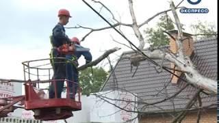 Жители проезда Лажечникова просят спилить аварийные деревья