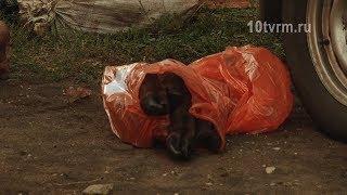 Браконьеры в Мордовии убили и разделали редких животных