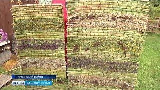 Жительница Башкирии создает панно из луговых трав