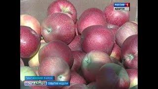 В Адыгее начался сбор яблок