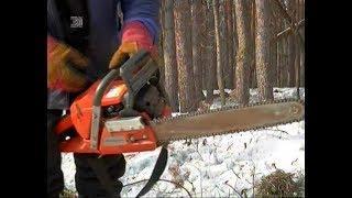 Саммит ШОС оставит Челябинск без деревьев? Мнения экспертов