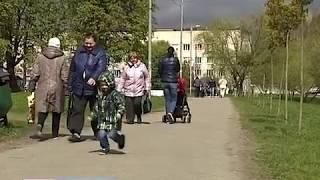Побережье озера Летнего в Калининграде украсят пять серебристых клёнов