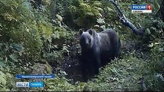 Медведи из заповедника «Столбы» вышли к людям в Красноярском крае