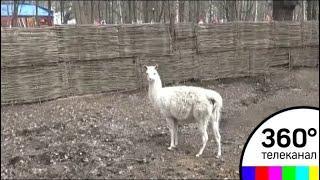 В Химки вернулся контактный зоопарк после зимы