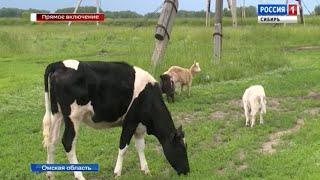 Фермерские хозяйства в Омской области восстанавливаются после вспышки вируса африканской чумы