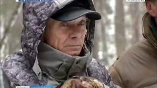 Активисты обнаружили незаконные вырубки в лесах Торгашинского хребта