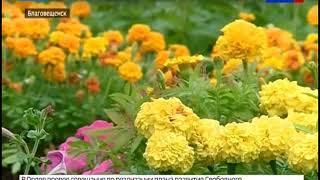 Благовещенск украсят почти 500 тысяч цветов