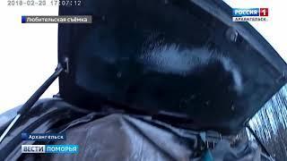 Дикую рысь, пойманную в одном из микрорайонов Архангельска, выпустили в лес