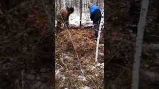Жуткие кадры с места нападения медведя на детей