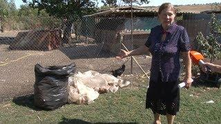 В селе Донском люди платят за вывоз отходов, хотя мусоровоз на их улице не появлялся.