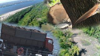«Ясень-пень»: На самом большом острове в Европе вырубаются посадки ценных пород деревьев