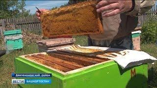 Погода против пчеловодов: Каким будет урожай мёда в Башкирии