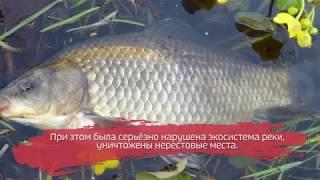 Самоуправство на миллион: жителя Вологды оштрафовали за экологическое преступление
