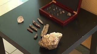 В окрестностях Саранска найдены окаменелые останки древних морских животных