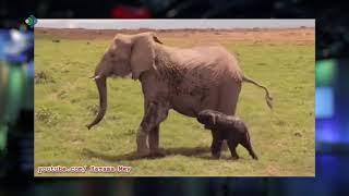 Слоны не мы: большие и забавные.Студия 11. 20.06.18