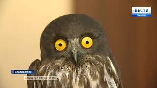 Иглоногая сова стала новым постояльцем зоопарка во Владивостоке