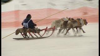 Лучшего оленевода выберут в Ханты-Мансийске