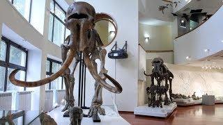 В Музее природы и человека Югры в «Ночь музеев» ожила экспозиция