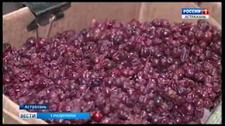 В Астрахани представили Архангельскую ягодную ярмарку