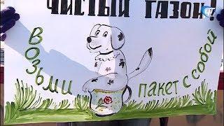 Зоозащитники и общественники требуют создания мест для выгула собак