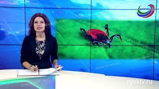 В Дагестане за лето 730 человек пострадали от укусов клещей