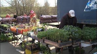 В Великом Новгороде прошла агропромышленная ярмарка «Сад-огород»