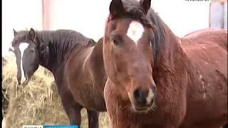 В пригородах Красноярска неизвестные похищают лошадей и вырезают скот
