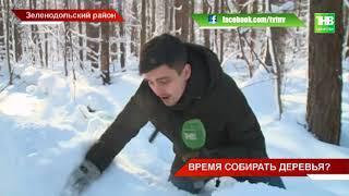 В Госдуме России в первом чтении был одобрен законопроект о бесплатном сборе валежника - ТНВ