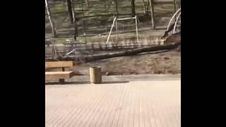 Последствия урагана в Центральном парке