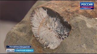 Останки древнего слона нашли в Ингушетии