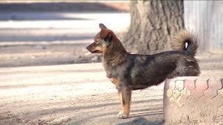 Приют для бездомных собак в Тынде  2
