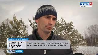 В Алтайском крае появилась новая технология пересадки взрослых деревьев