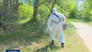 Экологический парк «Черное озеро» обработали от комаров, клещей и мух