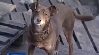 Дело новочеркасского живодера: если вину ветеринара докажут, ему грозит 5 лет тюрьмы