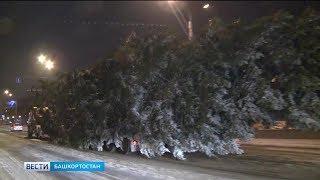 Программа «Говорит и показывает Уфа!» расскажет, как готовят ёлки к Новому году