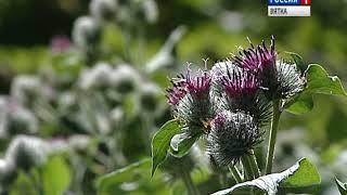 В Кирове будут штрафовать за нескошенную траву (ГТРК Вятка)