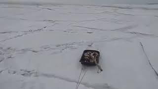 «Волна ломает лёд» – МЧС опубликовало шокирующее видео зимней рыбалки