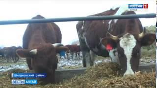 Фермер в Шипуновском районе планирует отказаться от выпаса скота