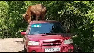 На Камчатке медведь залез на автомобиль и пытался проникнуть в салон