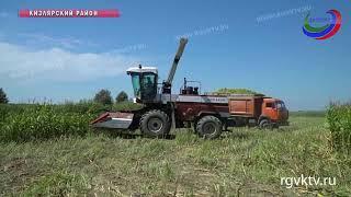 В Дагестане впервые,  запустят два рисоперерабатывающих завода
