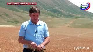 Низкий урожай зерновых ожидается в трех районах Дагестана из-за засухи