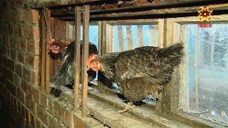 Патăрьелпе Комсомольски районĕсенче карантин вĕçленнĕ